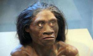 A model of a female Homo floresiensis.