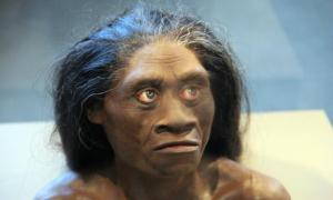 Homo Floresiensis - Hobbit