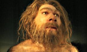 Reproduction of Homo neanderthalensis. Museum of Human Evolution (MEH), Burgos, Spain.