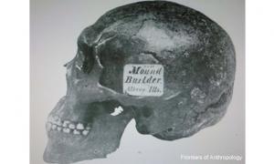 Hopewell Skull
