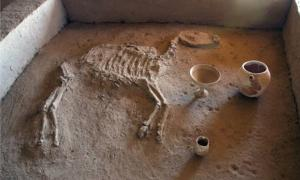 Ancient horse burial in Gonur Depe.