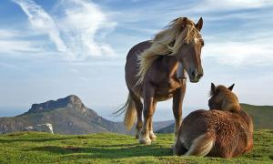Horses as Symbols of Power in History and Mythology