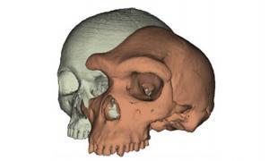 Eyebrows on fleek: Model of a modern human skull next to Kabwe 1.