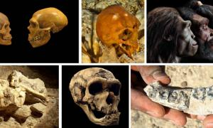 Top 10 Human Origins Discoveries in 2015