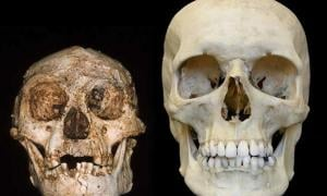 Humans Wiped Out the Hobbit: New Study Suggests Homo Sapiens Caused Extinction of Tiny Homo Floresiensis Species