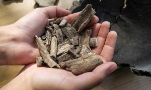 Human remains discovered during excavations of cemetery from early Iron Age in Kosiorow village, Eastern Poland.