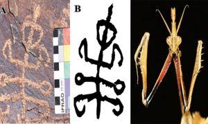 The Squatter / Mantis-Man petroglyph found in Teymareh rock art site, Iran. Right A praying mantis, Empusa hedenborgi.      Source: Dr Mohammad Naserifard / Mr Mahmood Kolnegari
