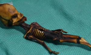 Mummified specimen from the Atacama region of Chile. Scientists say the remains are of a baby girl with numerous mutations – not a tiny alien.