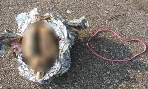 The brain was found wrapped in aluminum foil on the shore of Lake Michigan in the USA. Source: James Senda