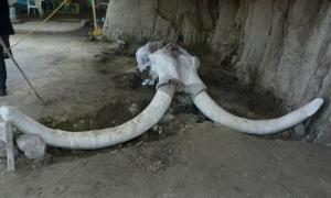 The mammoth traps were found in Tultepec, Mexico. Source: Edith Camacho, INAH
