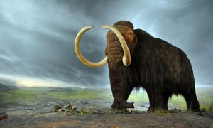 A woolly mammoth