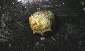 Elongated skull in Mayan cave