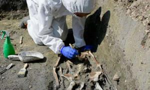 This is the skeleton discovered during excavations exploring Medieval life on Torcello Island, Venice, Italy.