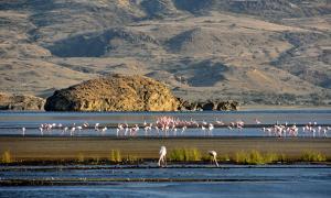 Flamingos at Lake Natron.