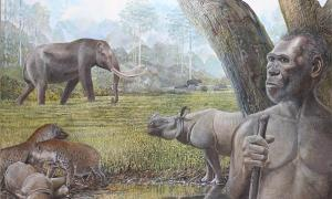 Artist's reconstruction of a savannah in Middle Pleistocene Southeast Asia. In the foreground Homo erectus, stegodon, hyenas, and Asian rhinos are depicted. Water buffalo can be seen at the edge of a riparian forest in the background. Source: Peter Schouten / Nature