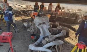 Fossils of almost 70 mammoths have been found at the future site of a Mexican airport. Source: INAH