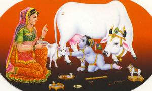 Sticker showing baby Krishna stealing milk from a cow.