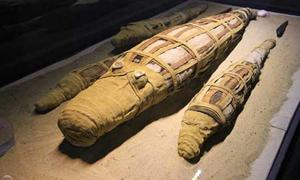 2,500-Year-Old Mummified Crocodile Yields Surprises