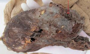 Mummified Head of Newborn Baby with Extremely Elongated Skull Found in Peru
