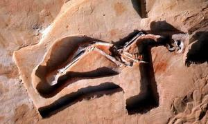 The remains of Mungo Man