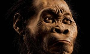 A reconstruction of Homo naledi's head by paleoartist John Gurche, who spent some 700 hours recreating the head from bone scans.
