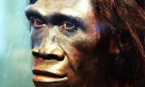 A model of the face of an adult female Homo erectus. Reconstruction by John Gurche, Smithsonian Museum of Natural History
