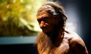 One Million Years of the Human Story at the Natural History Museum.