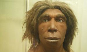 Reconstruction of what a Neanderthal may have looked like in the Museum für Naturkunde, Berlin, Germany