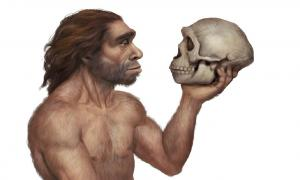 Illustration of Neanderthal Man Holding Neanderthal's Skull  Source: Roni / Adobe Stock
