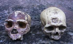 Neanderthal ancestry found in Africans.        Source: procy_ab / Adobe Stock