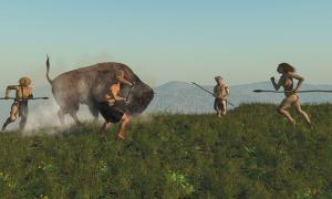Group of Neanderthal hunting a bison. New research confirms meat was a major part of the Neanderthal diet.