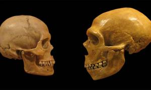 Scientists Create Fully Functioning Neanderthal Mini Brain