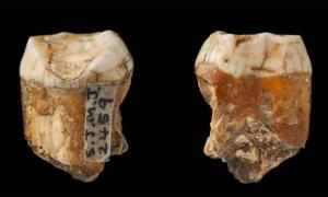Neanderthal Interbreeding with Humans Rampant on Jersey?