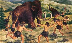 Neanderthals would drive mammoth off the edge of cliffs