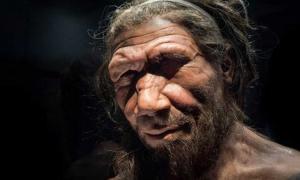 Neanderthal man at the Natural History Museum London