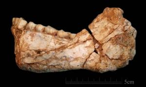An almost complete adult mandible found at Jebel Irhoud, Morocco. New discoveries at the site date the earliest Homo sapiens to 300,000 years ago.