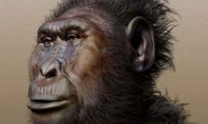 Paranthropus boisei (Forensic facial reconstruction) likely contracted the virus from eating chimpanzees.