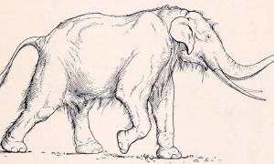 Paeleoxodon anitquus was a large elephant species that became extinct.
