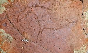 The drawings, though difficult to date scientifically, match the style of Paleolithic drawings of 8,000 to 10,000 years ago.