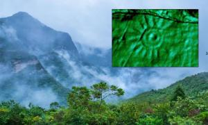 Main: Amazon jungle in Peru. Source: Christian / Adobe Stock. Inset: A close-up of one of the engravings on the Peruvian monolith. Source: Daniel Fernandez-Davila / Exact Metrology.