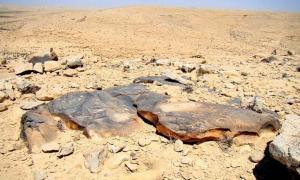 Petroglyphs in the Negev desert.