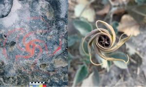 Magic Flowers of U.S. Dream Trippers Found at California's Pinwheel Cave
