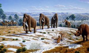 Pleistocene of Northern Spain showing woolly mammoth, cave lions eating a reindeer, tarpans, and woolly rhinoceros.
