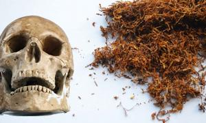 A human skull (Public Domain) and tobacco. (Public Domain)