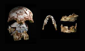 Prehistoric Skull and Jaw Found in Laos