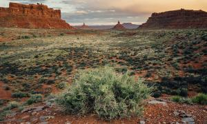 Valley of the Gods, Bears Ear National Monument, Utah, where the Pueblo peoples practiced a form of sustainable agriculture long ago. The plants they planted are now being used as a clue for finding other possible archaeological artifacts nearby.