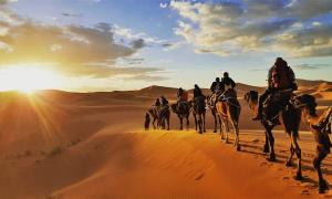 Much of the Radhanites' overland trade between Tangier and Mesopotamia was by camel. Source: Gaper / Adobe Stock