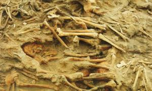 Remains of European soldiers of Napoleon's Grand Army, who died of starvation, disease and the elements, in a mass grave in Vilnius, Lithuania