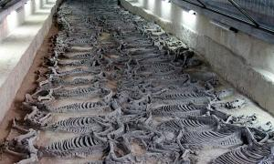 Archaeologists Unearth Gruesome Site Where Chinese Emperors Sacrificed Horses