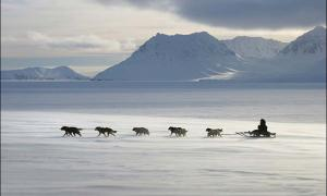 Ancient people used dog sleds to cover these remarkable distances 'at the ends of the earth'.